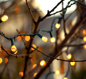 Lights and twigs_Website